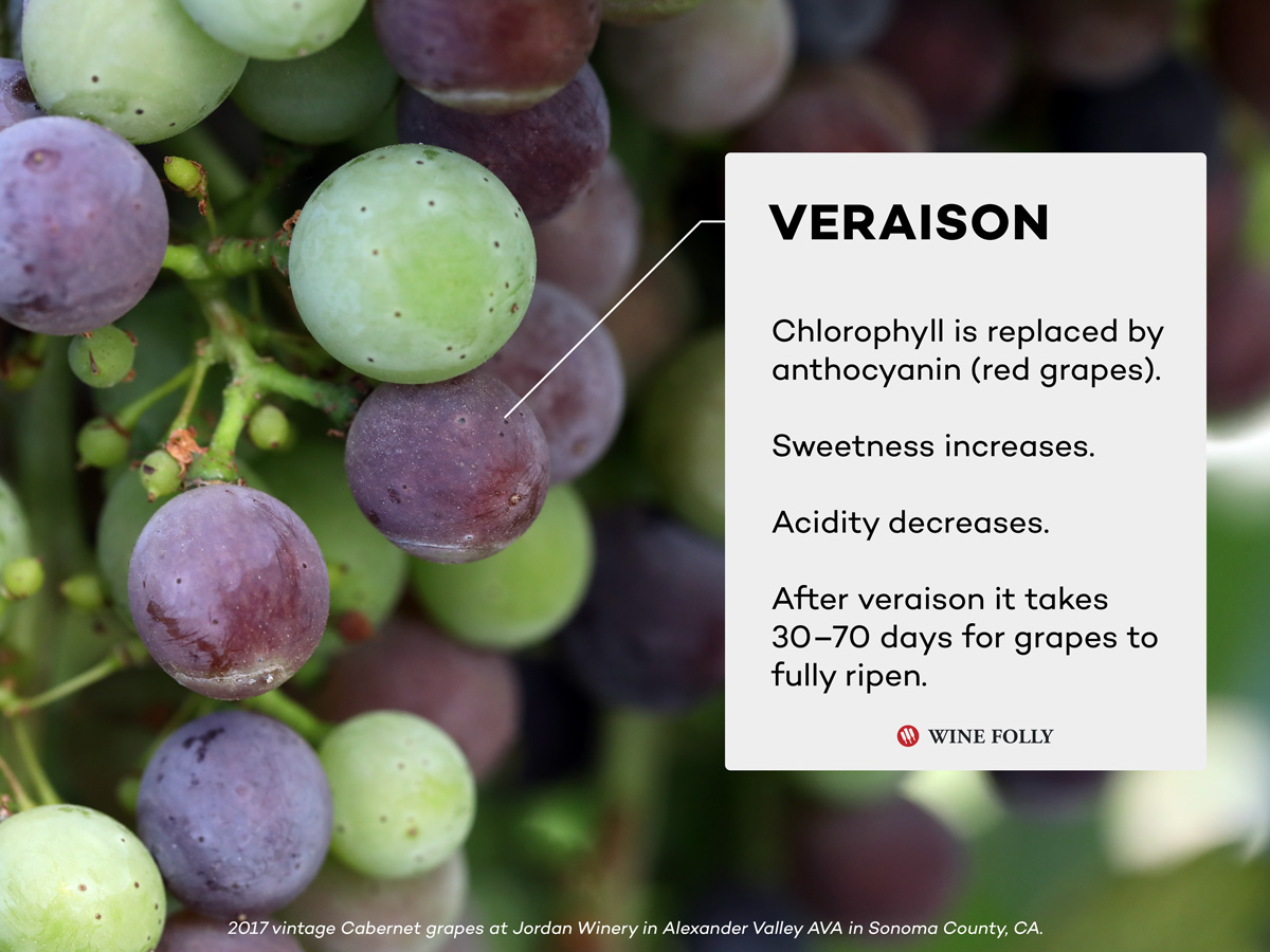 Veraison Facts Wine