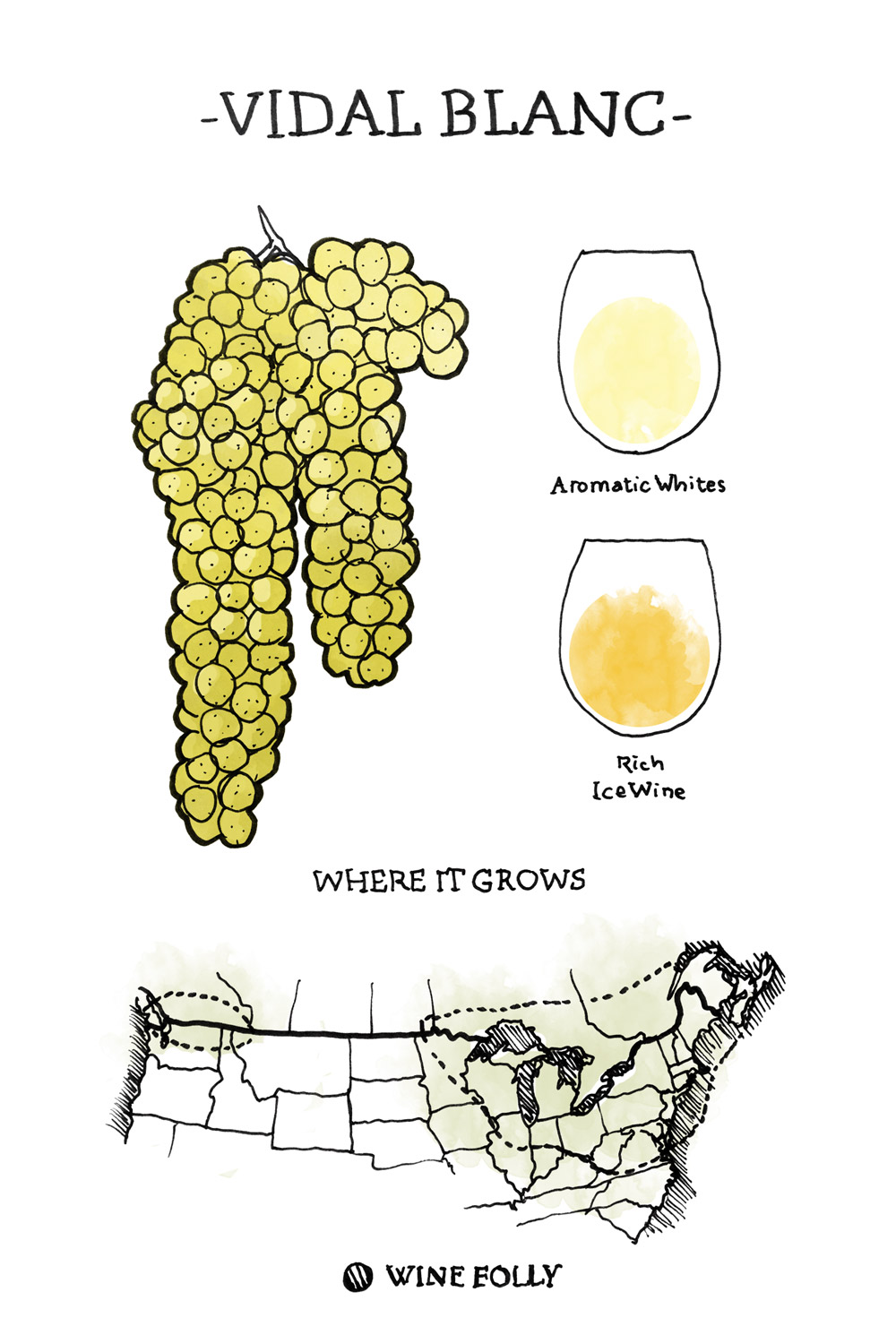 vidal-blanc Wine Grape Illustration and Regional Map by Wine Folly