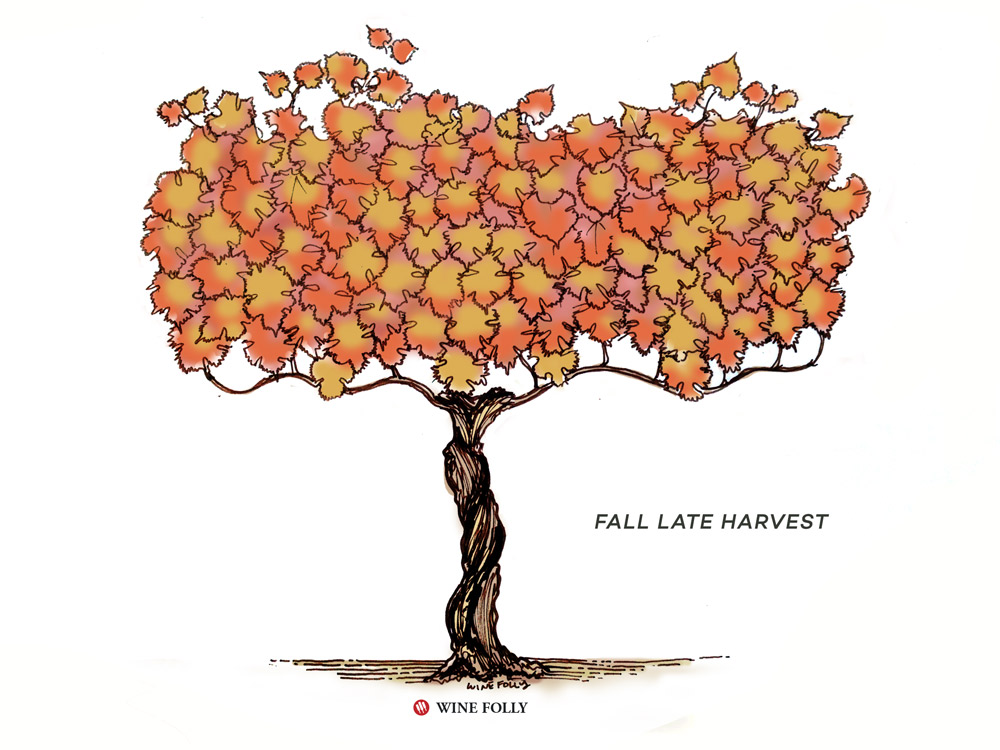 vine-lifecycle-fall-late-harvest
