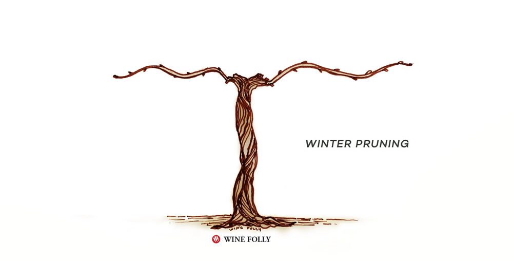 vine-lifecycle-winter-pruning