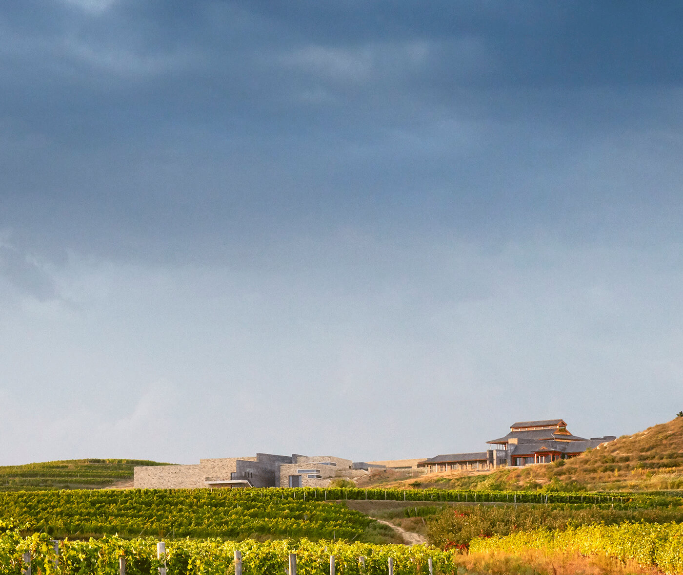 domaine-de-long-dai in China's Penglai - Yantai wine region