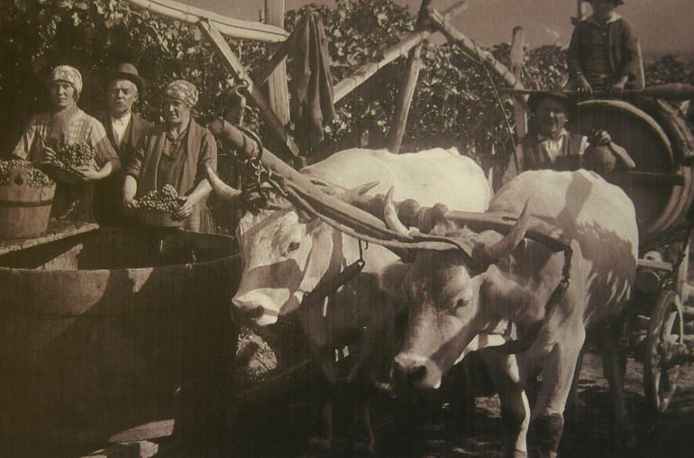 Vintage Wine Region Photo of Alto Adige