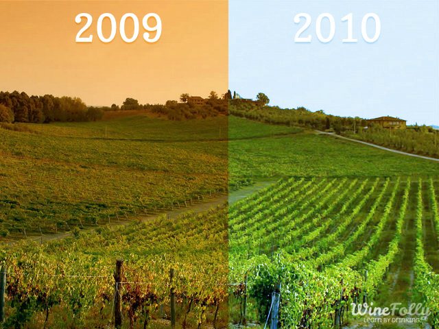 how climate and weather affects vineyards with vintage variation