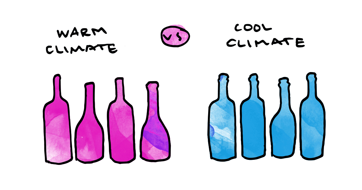 warm-climate-vs-cool-climate-wine