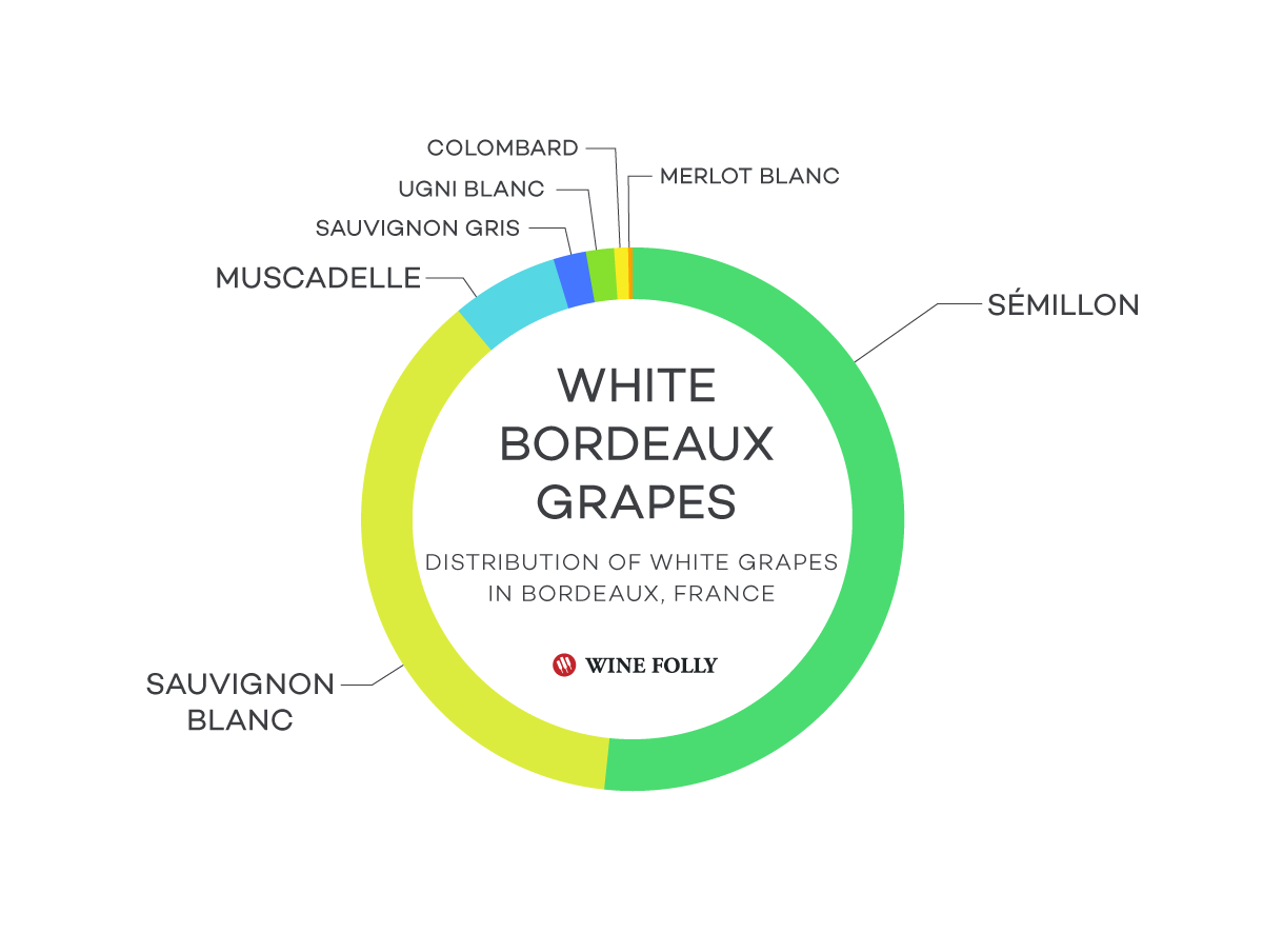 Image result for bordeaux wine grapes