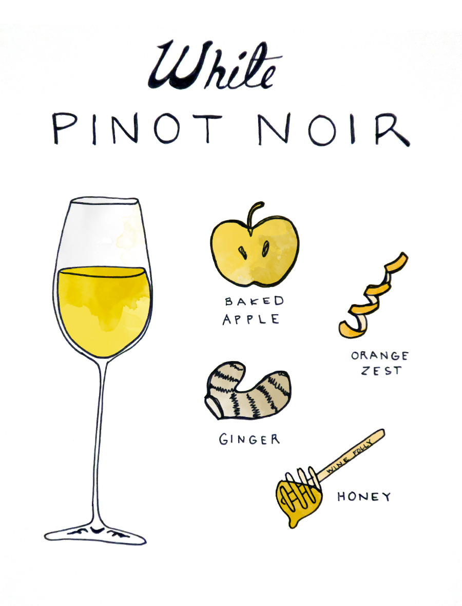 white-pinot-noir-illustration