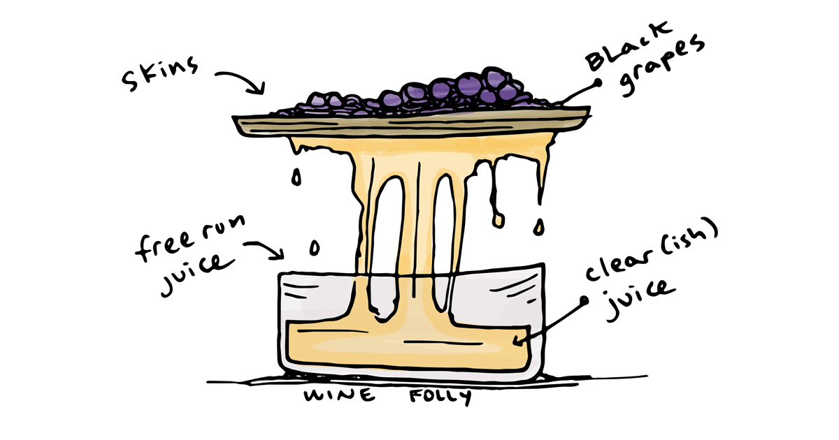white-pinot-noir-winemaking-illustration-winefolly