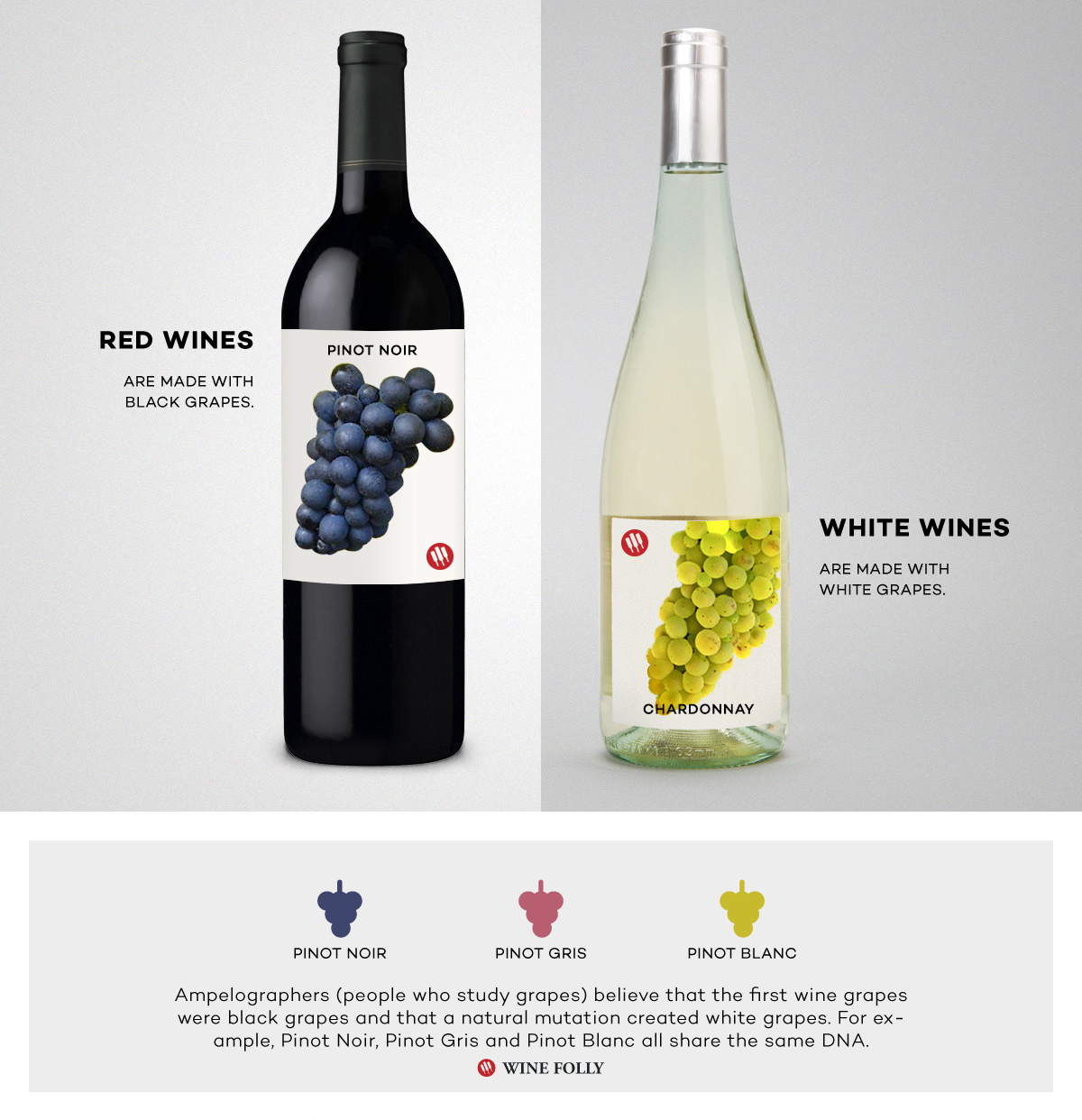 Red wine vs White Wine Pinot Noir and Chardonnay Comparison by Wine Folly