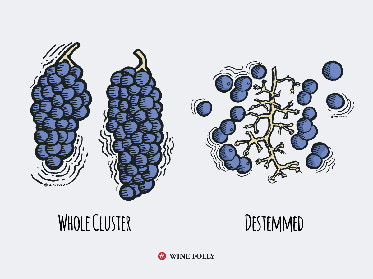 Whole Cluster Fermentation destemmed illustration by Wine Folly