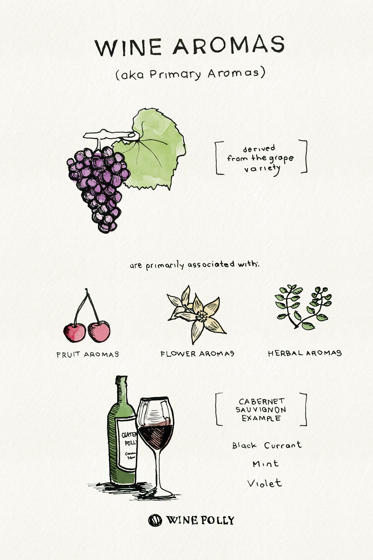 Wine Aromas - Primary Aromas - drawing by Wine Folly