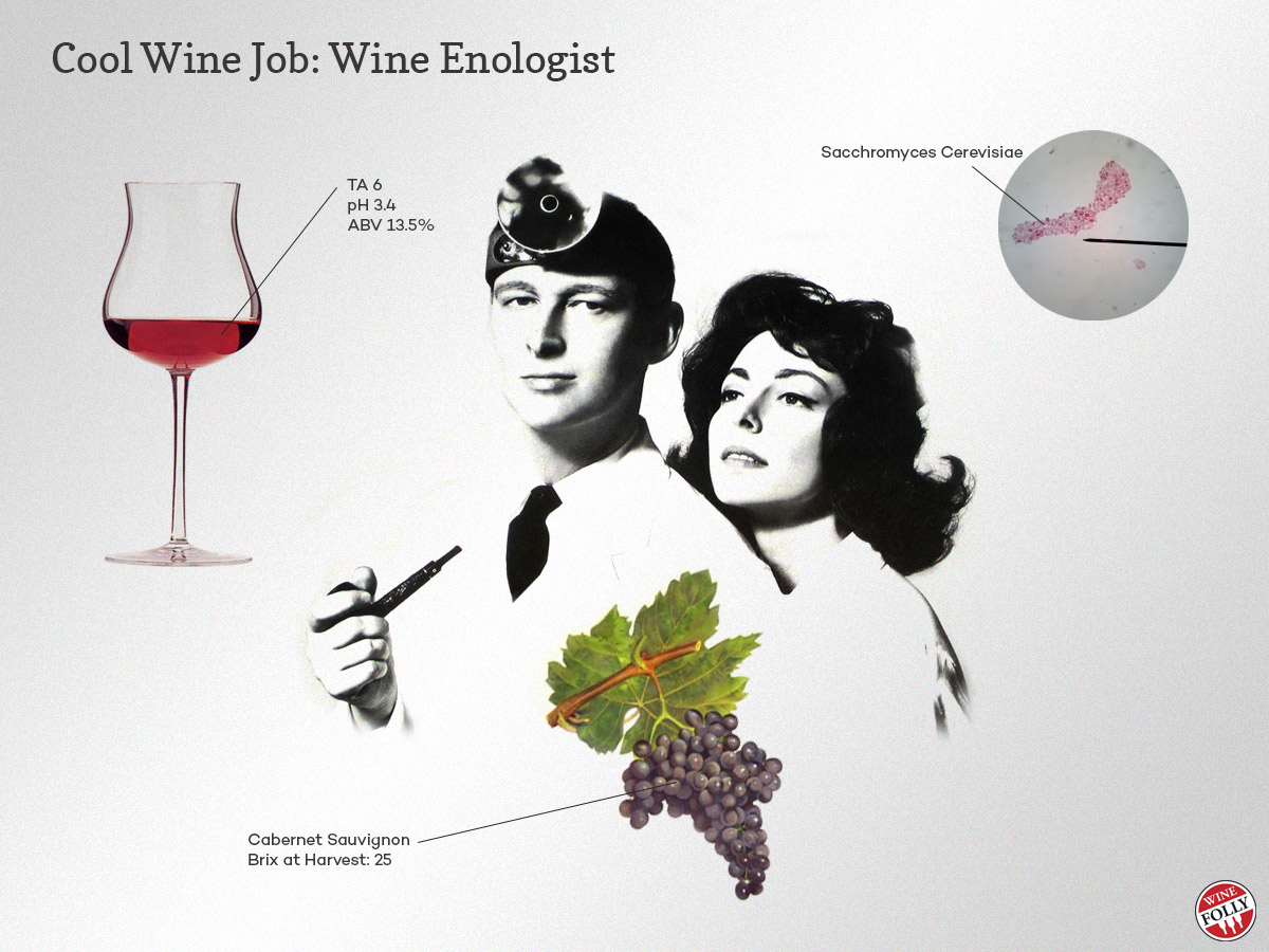 All about Wine Enologist Job