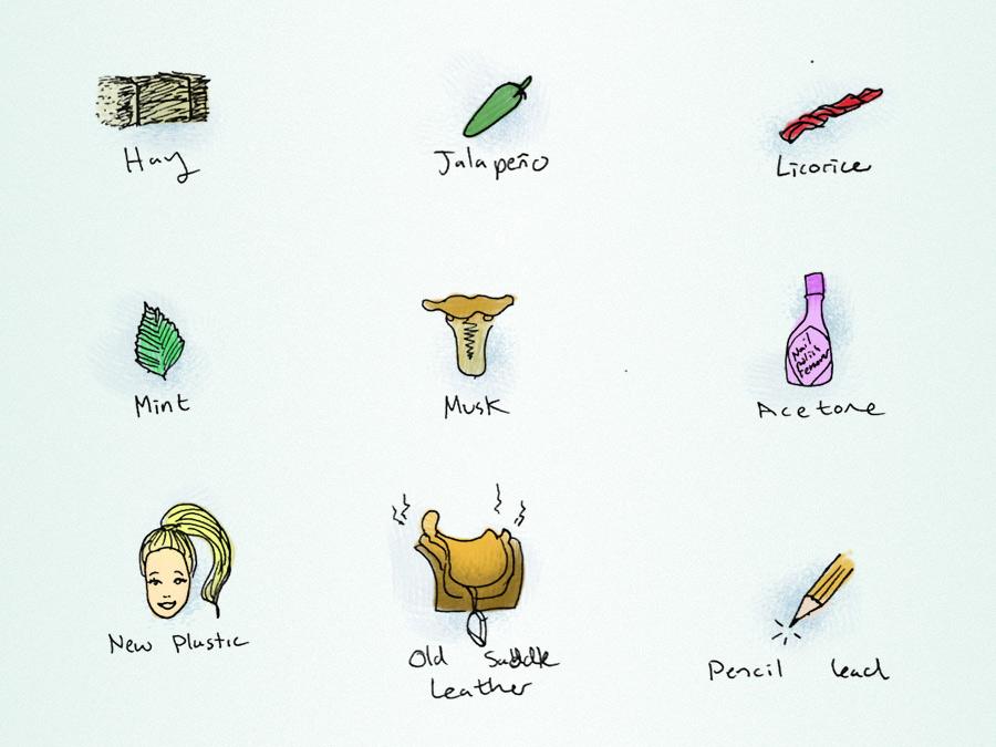 wine-flavors-excerpt