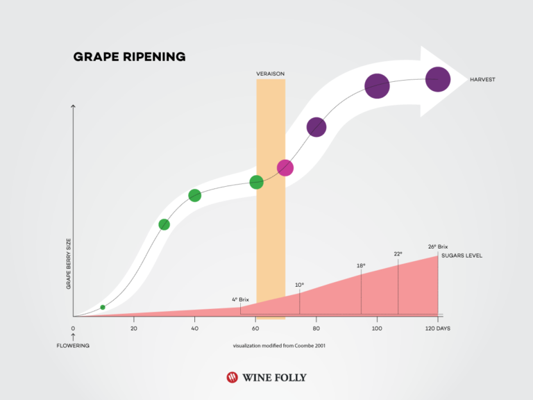 Wine Grape Ripening Chart by Wine Folly