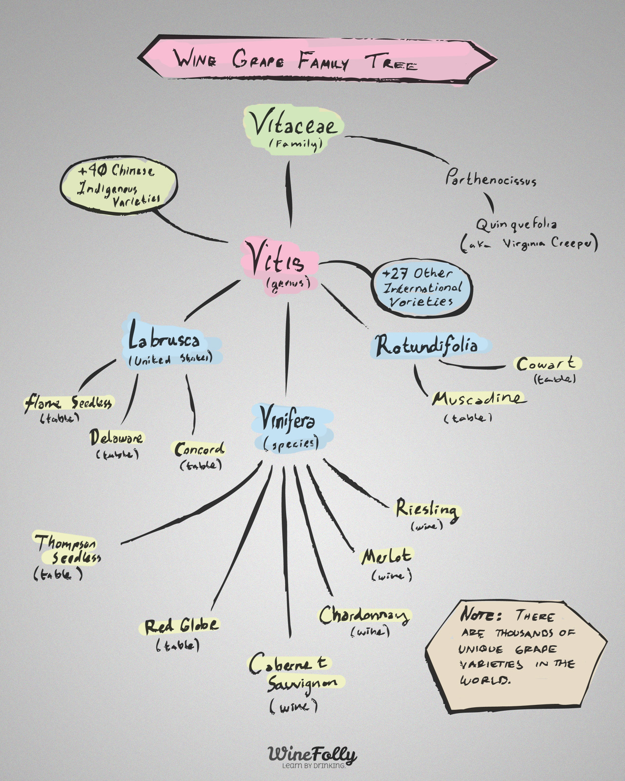 Wine Grape Vitis Genus Species Family Tree