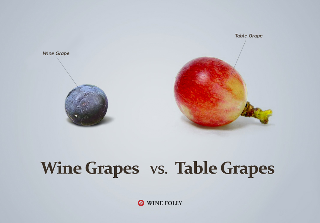 Wine Grapes vs. Table Grapes Image by Wine Folly