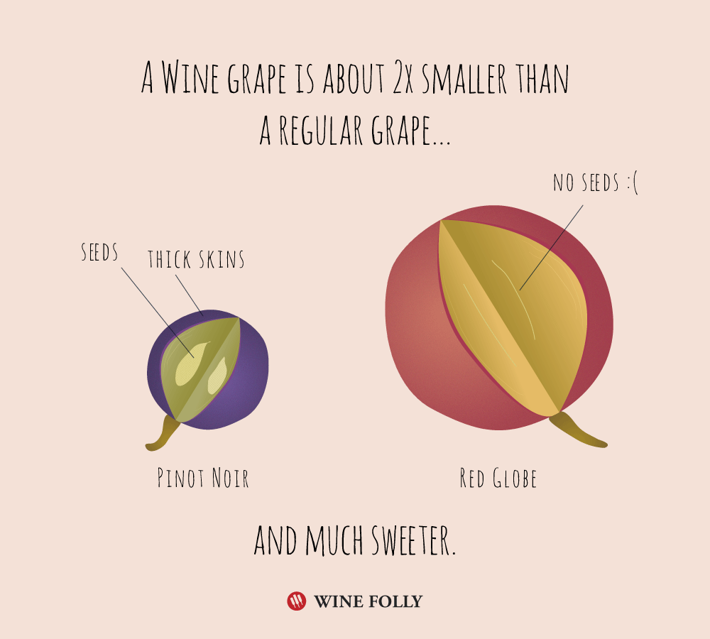 wine-grapes-vs-table-grapes