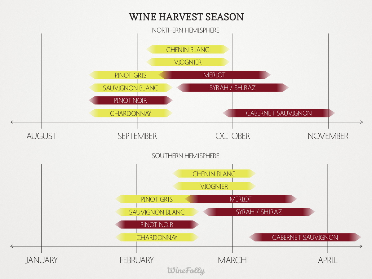 wine-harvest-season