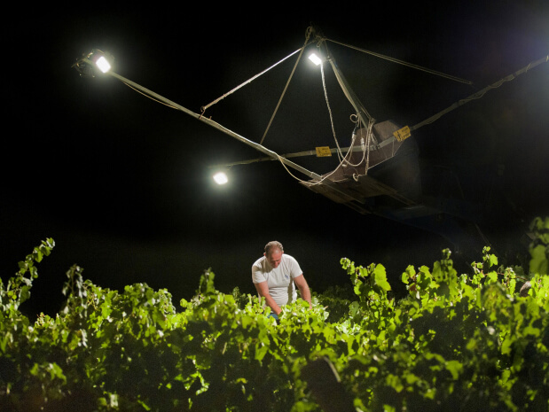 wine-is-made-from-grapes-to-glass-harvesting-night-sicily