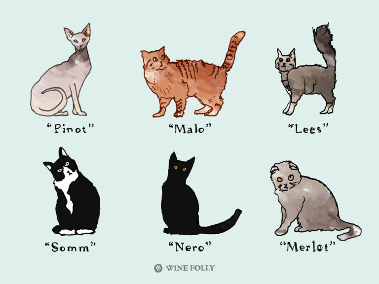 Wine Names for Cats Excerpt Illustration by Wine Folly