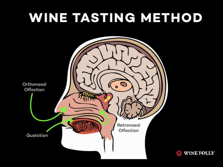 wine-tasting-method-video