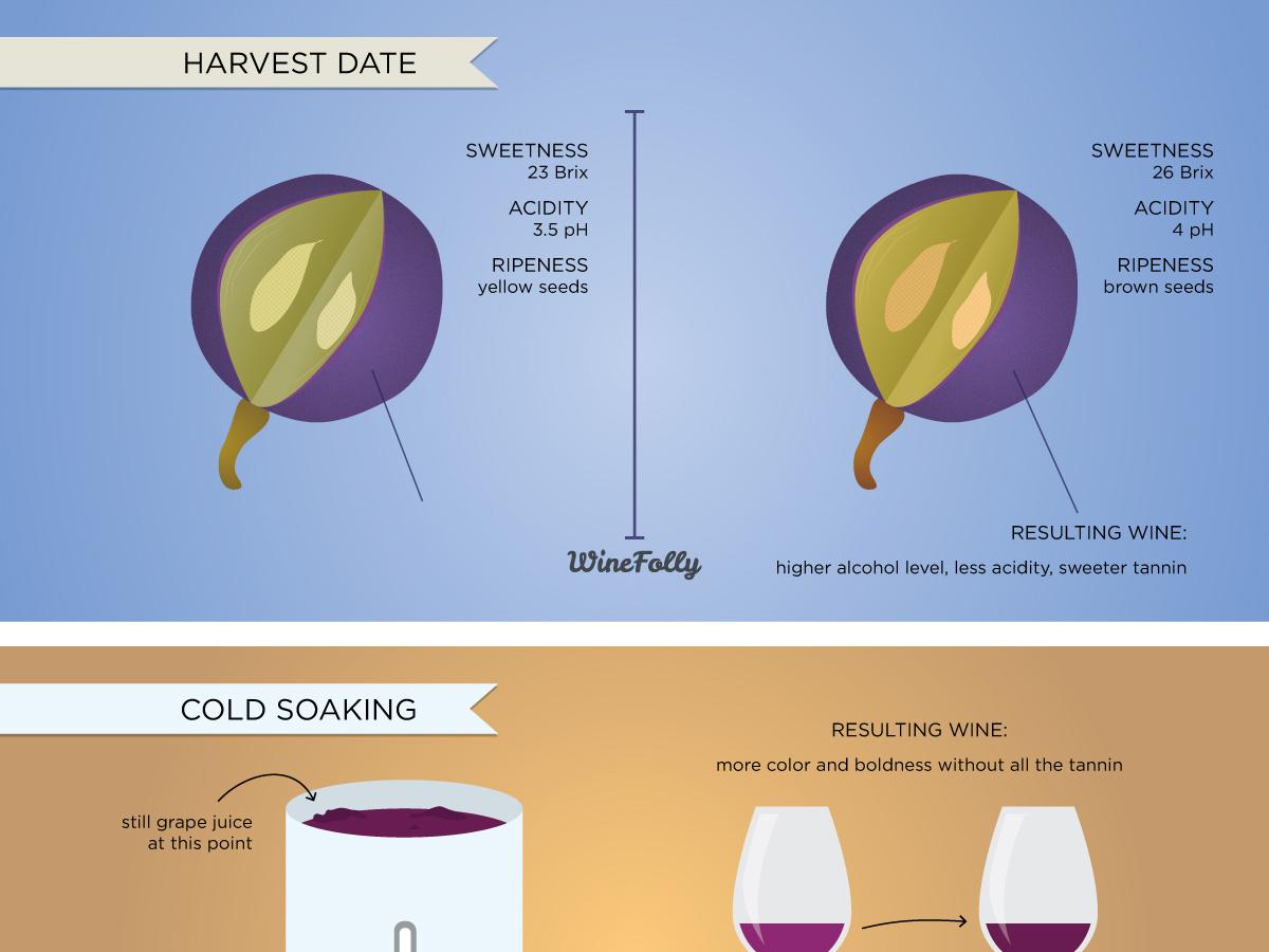 winemaking-affects-wine-taste-excerpt