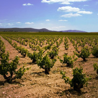 yecla vineyards murcia valencia spain monastrell-ryan-opaz
