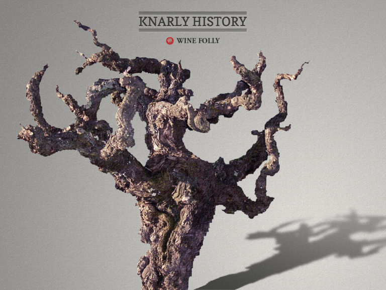 Old Vine Zinfandel Head Trained from Knarly Head